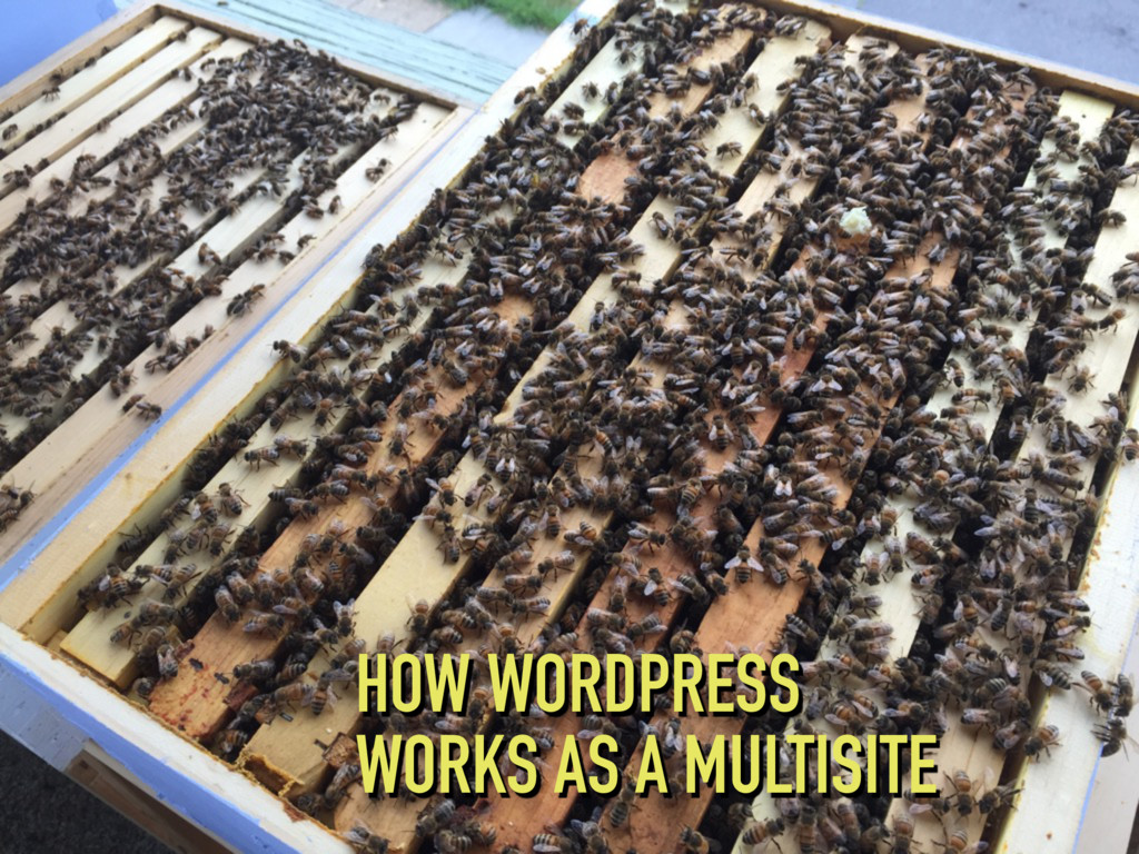 HOW WORDPRESS WORKS AS A MULTISITE