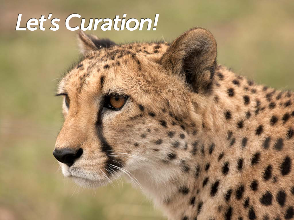 Let's Curation!
