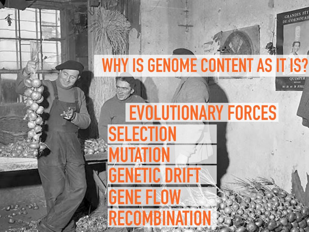 RECOMBINATION GENE FLOW GENETIC DRIFT MUTATION ...