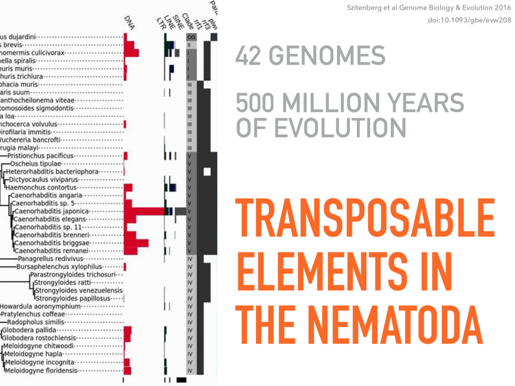 TRANSPOSABLE ELEMENTS IN THE NEMATODA 42 GENOME...