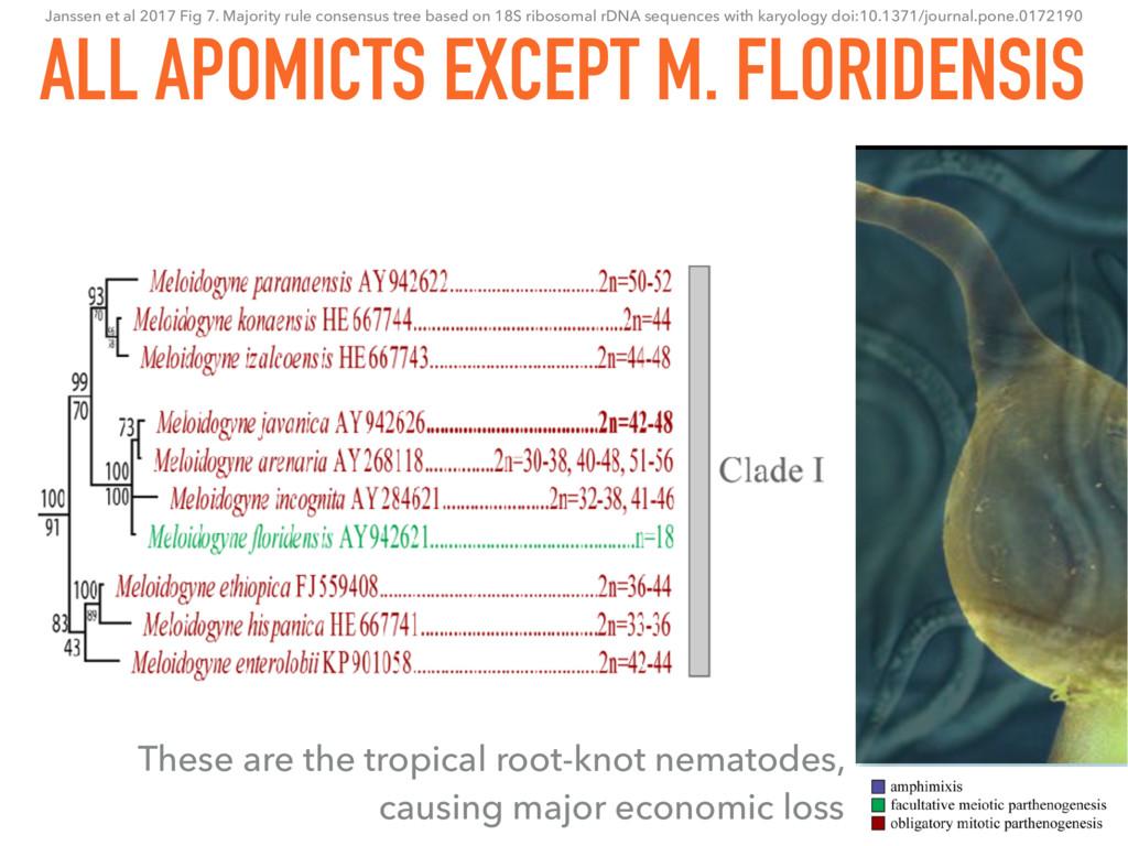 24 ALL APOMICTS EXCEPT M. FLORIDENSIS Janssen e...