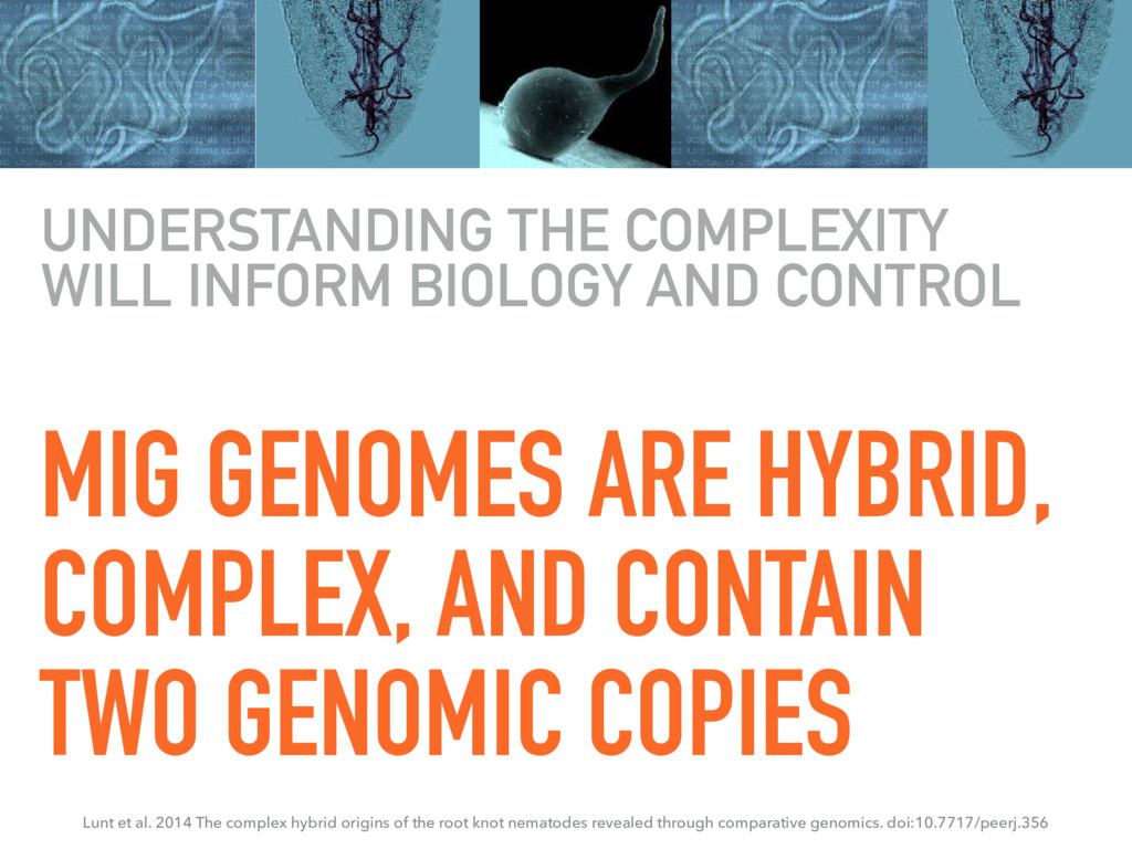 MIG GENOMES ARE HYBRID, COMPLEX, AND CONTAIN TW...