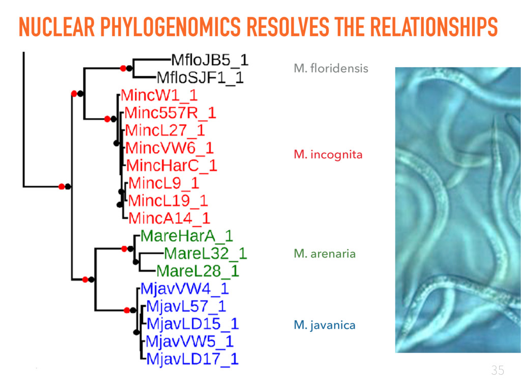 35 NUCLEAR PHYLOGENOMICS RESOLVES THE RELATIONS...