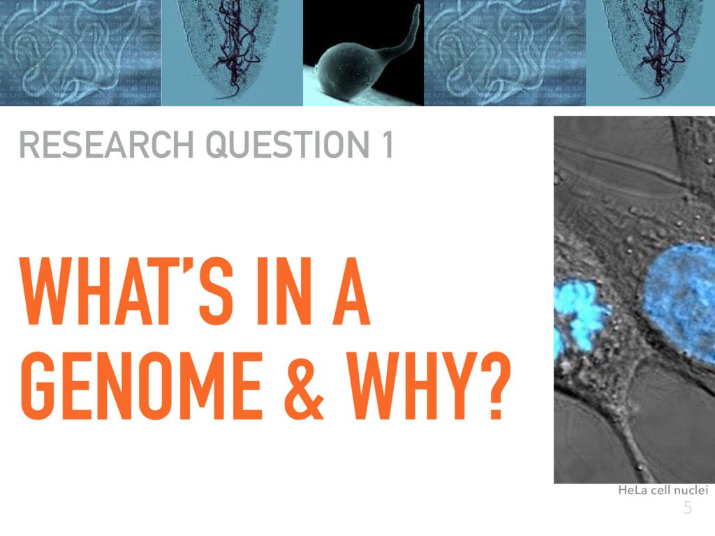 5 WHAT'S IN A GENOME & WHY? RESEARCH QUESTION 1...