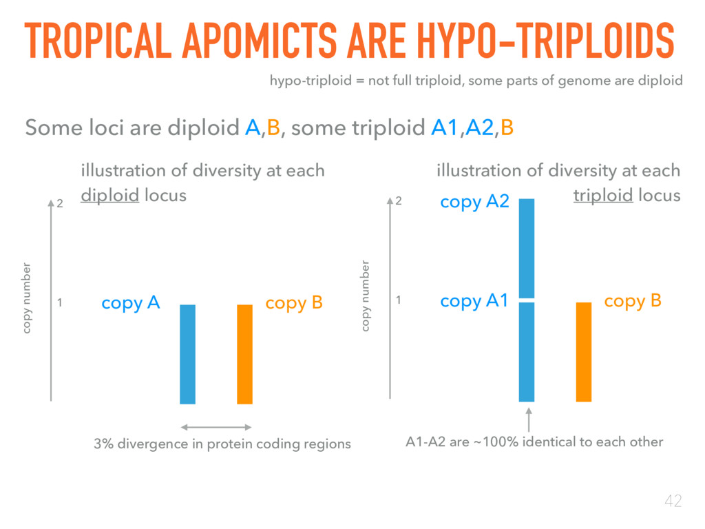 42 TROPICAL APOMICTS ARE HYPO-TRIPLOIDS hypo-tr...
