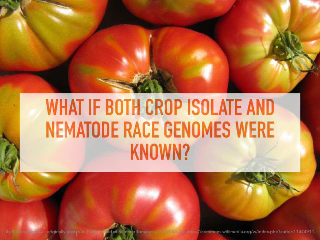 WHAT IF BOTH CROP ISOLATE AND NEMATODE RACE GEN...