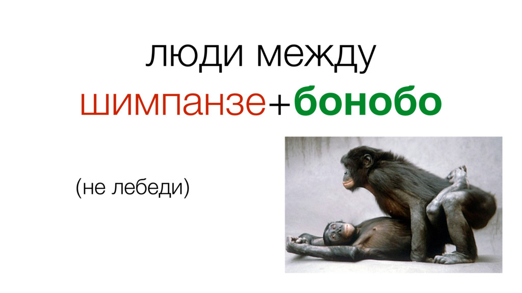 люди между шимпанзе+бонобо ! (не лебеди)