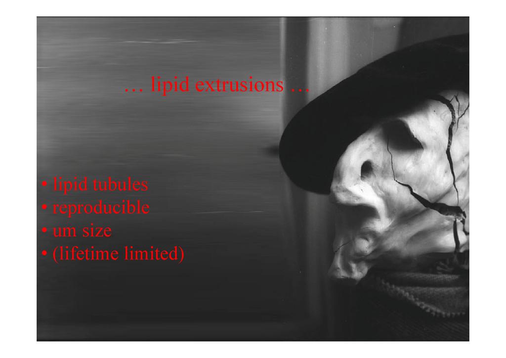 … lipid extrusions … li id t b l • lipid tubule...