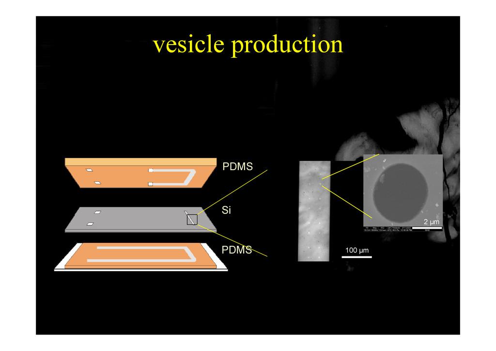 vesicle production p PDMS Si PDMS 100 µm 2 µm
