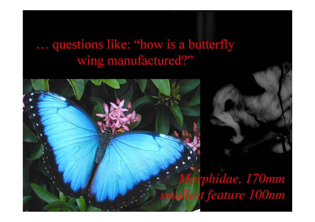 """… questions like: """"how is a butterfly wing manu..."""