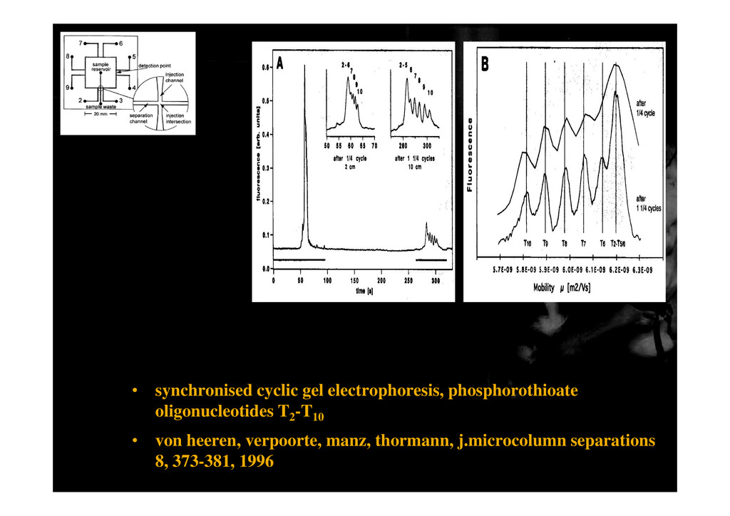• synchronised cyclic gel electrophoresis, phos...