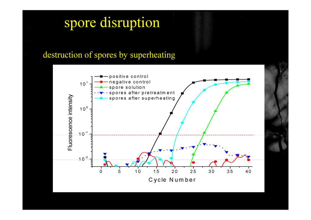 spore disruption destruction of spores by super...