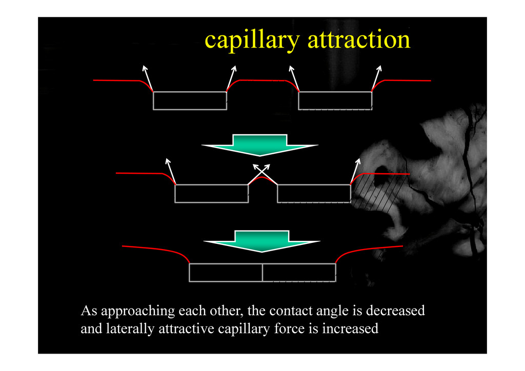 capillary attraction As approaching each other ...