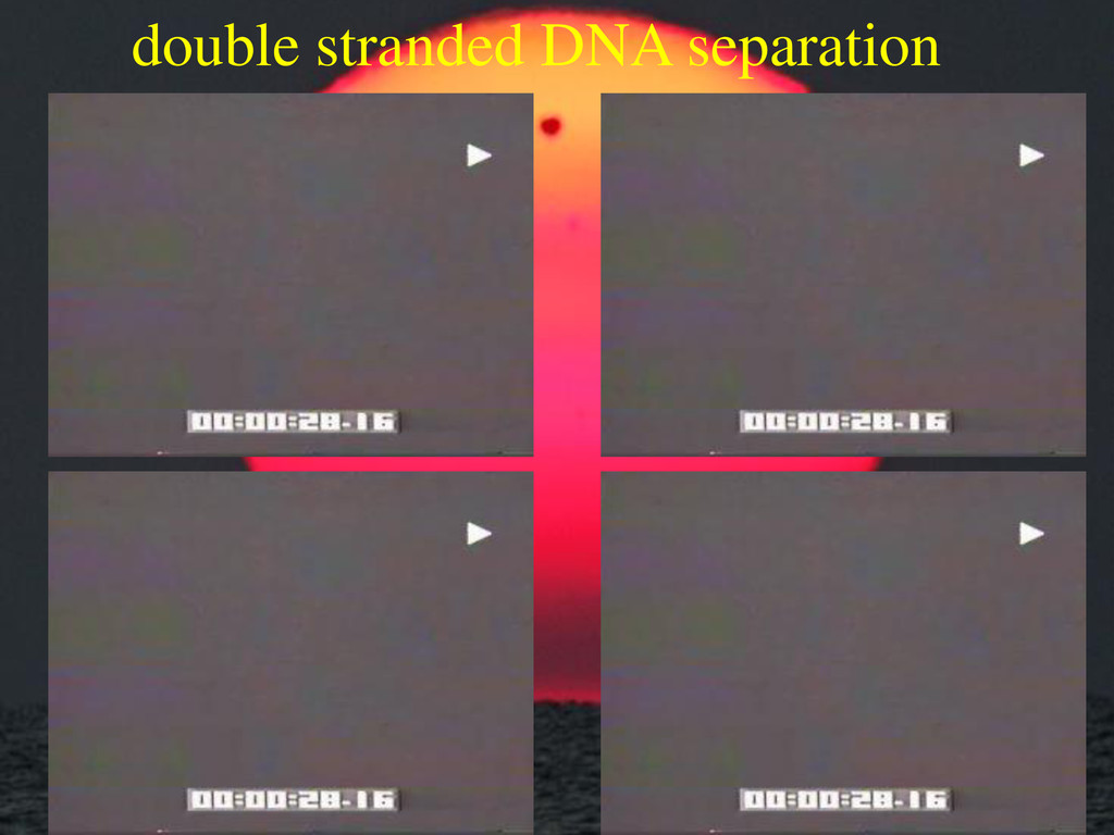 double stranded DNA separation