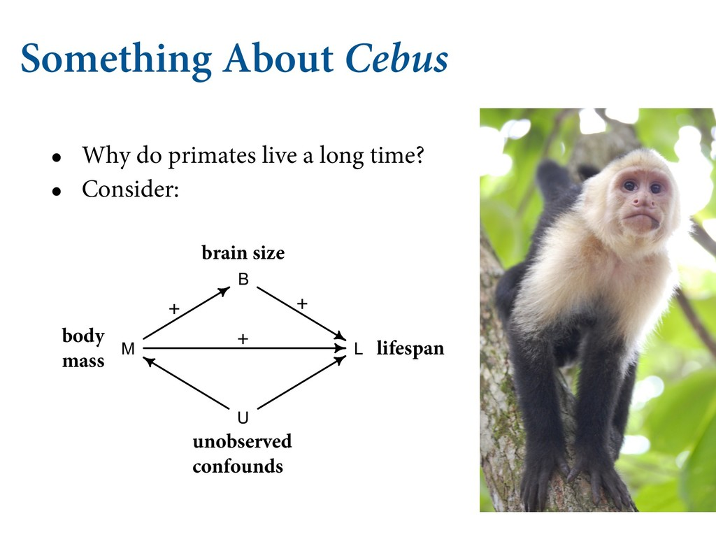 Something About Cebus • Why do primates live a ...