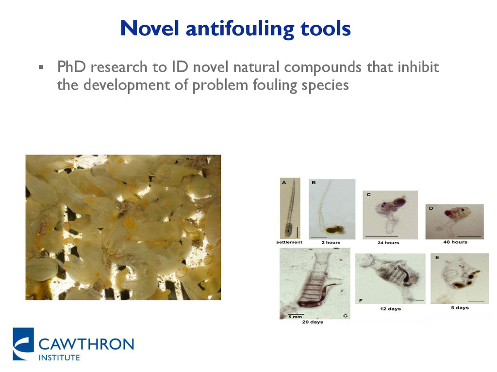 Novel antifouling tools  PhD research to ID no...