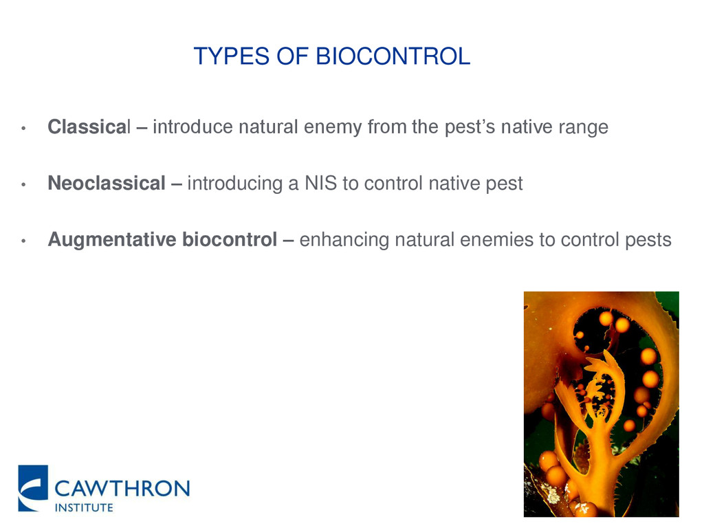 • Classical – introduce natural enemy from the ...