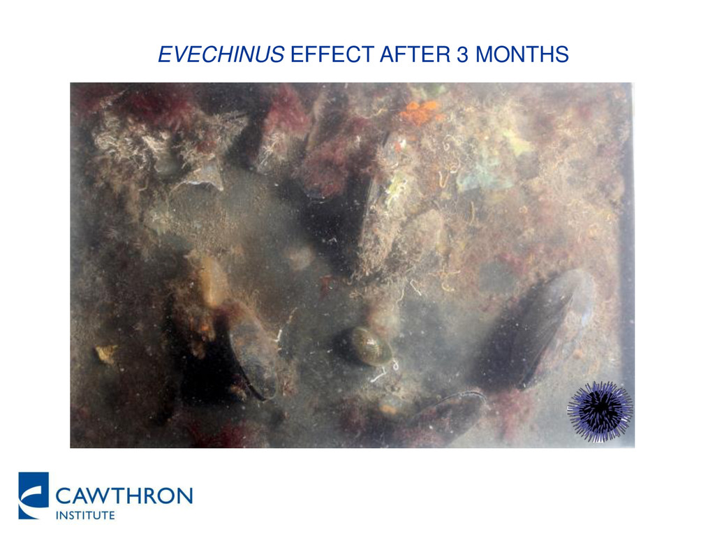 EVECHINUS EFFECT AFTER 3 MONTHS