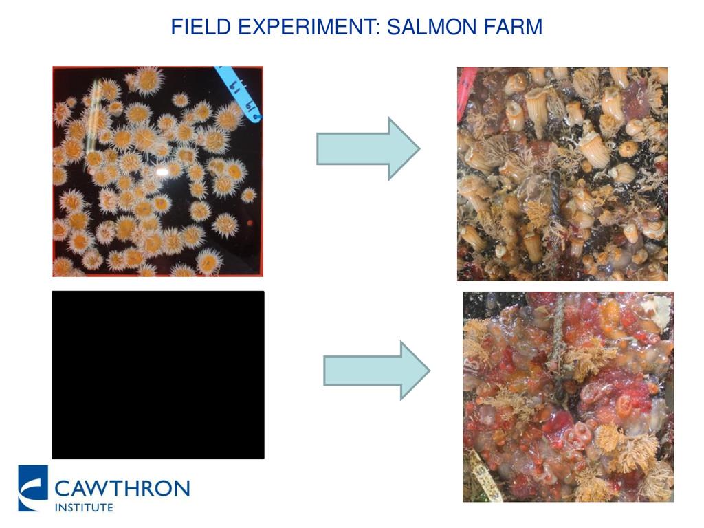 FIELD EXPERIMENT: SALMON FARM