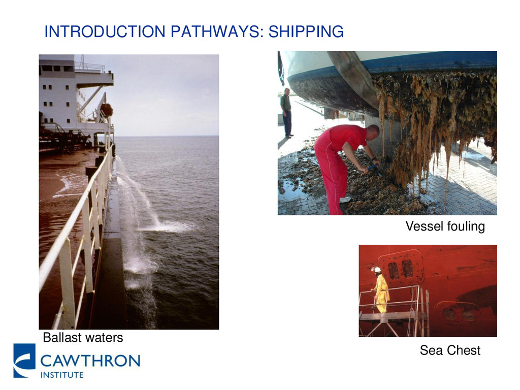 INTRODUCTION PATHWAYS: SHIPPING Ballast waters ...