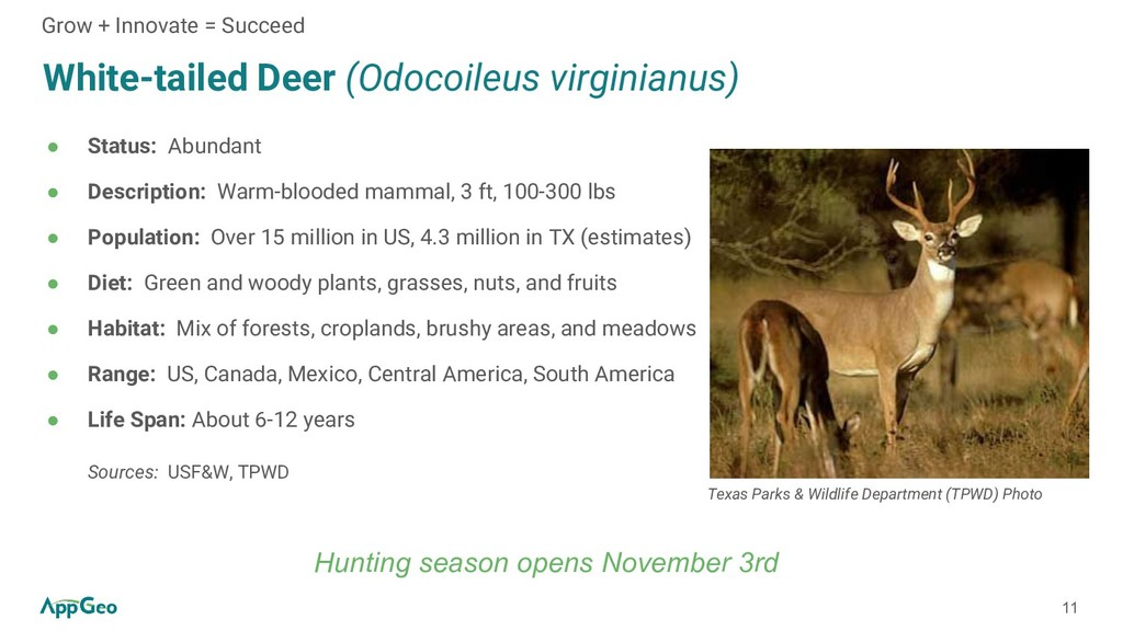 11 White-tailed Deer (Odocoileus virginianus) ●...