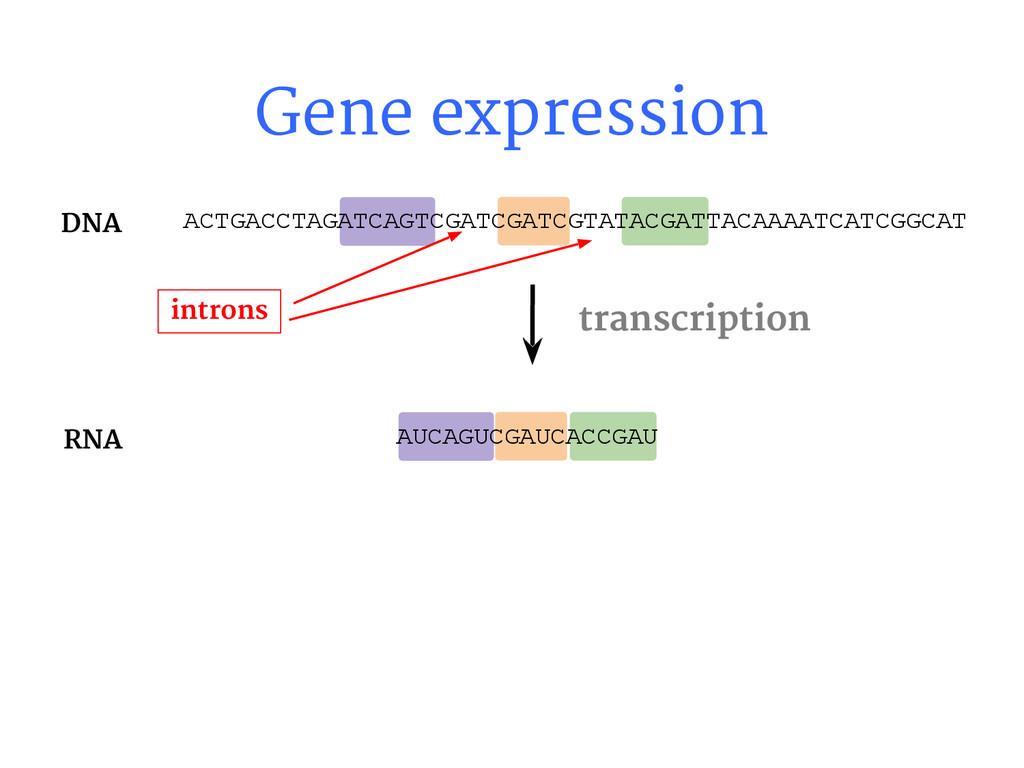 Gene expression AUCAGUCGAUCACCGAU transcription...