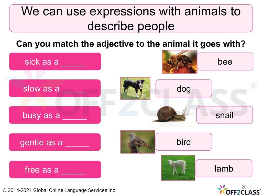 We can use expressions with animals to describe...