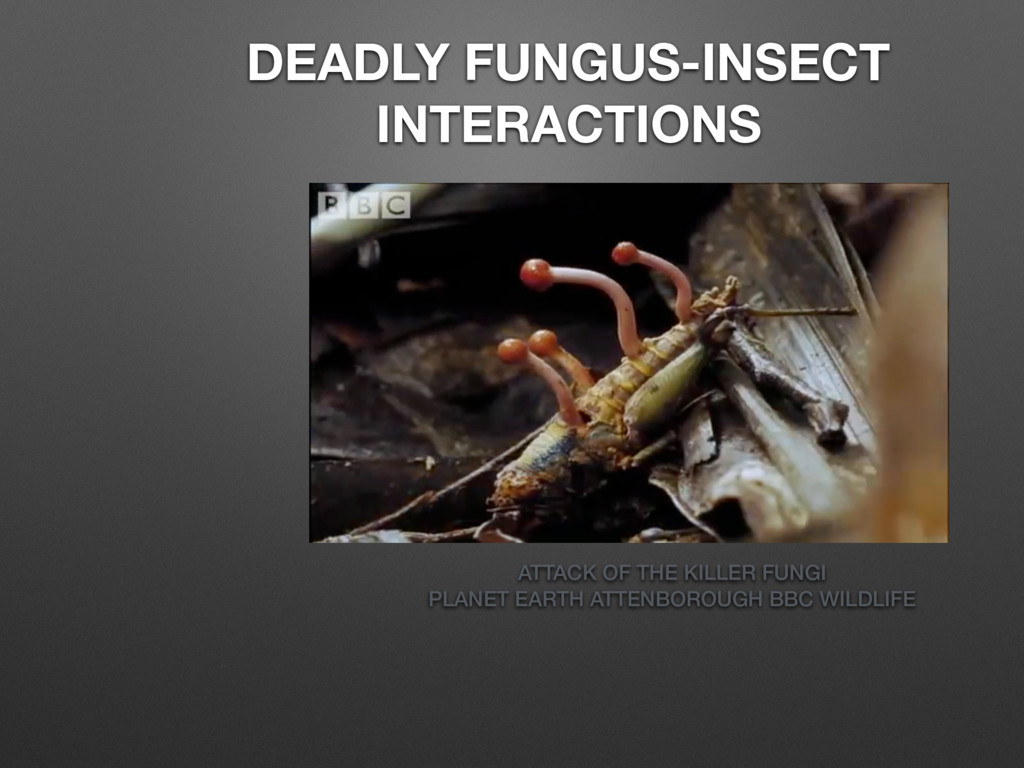 DEADLY FUNGUS-INSECT INTERACTIONS ATTACK OF THE...
