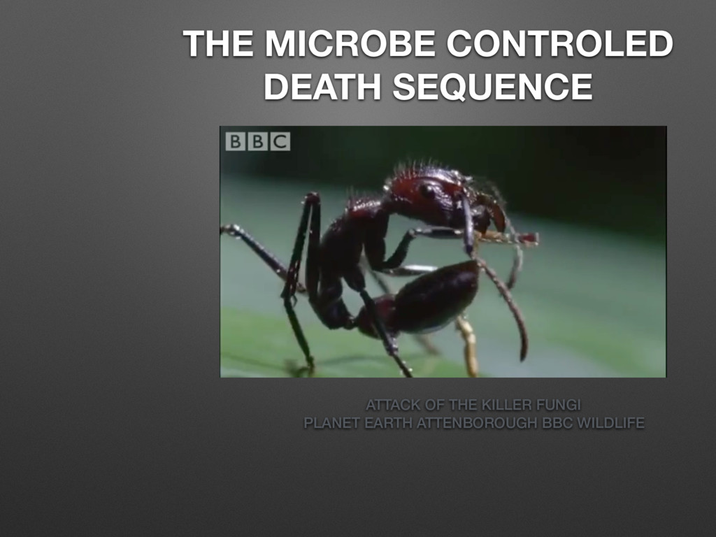 THE MICROBE CONTROLED DEATH SEQUENCE ATTACK OF ...