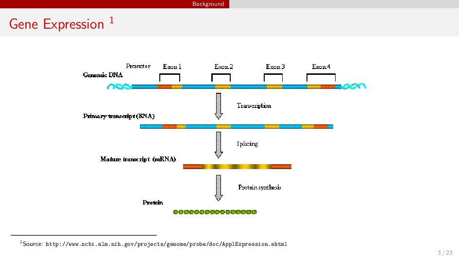 Background Gene Expression 1 1Source: http://ww...
