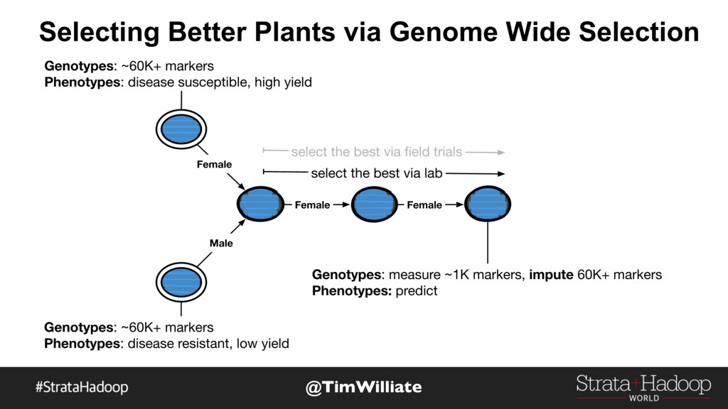 Selecting Better Plants via Genome Wide Selecti...