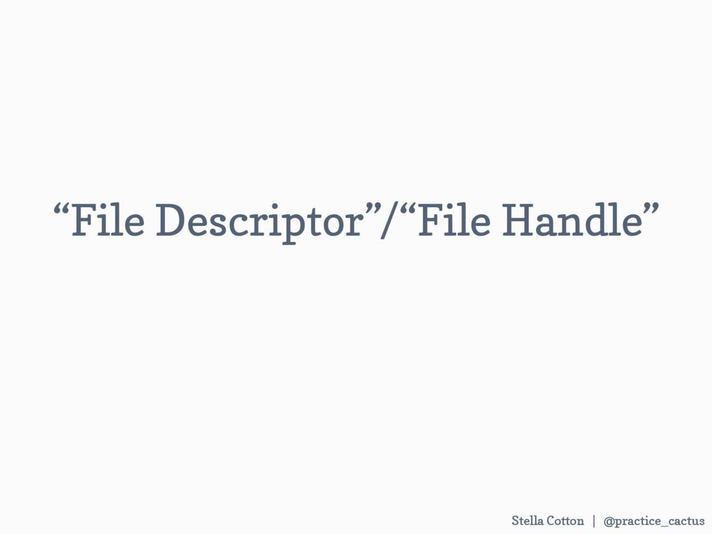 "Stella Cotton | @practice_cactus   ""File Desc..."
