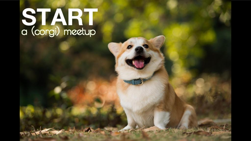 a (corgi) meetup