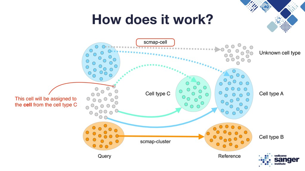 How does it work? Query Reference scmap-cluster...