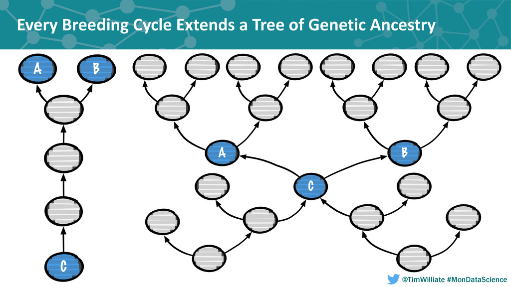 Every Breeding Cycle Extends a T...