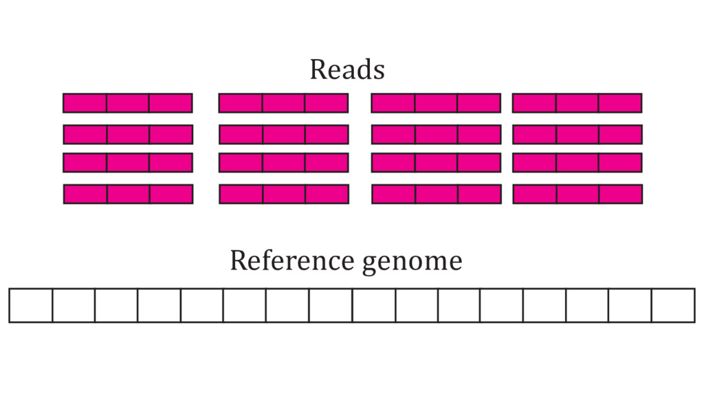Reference genome Reads