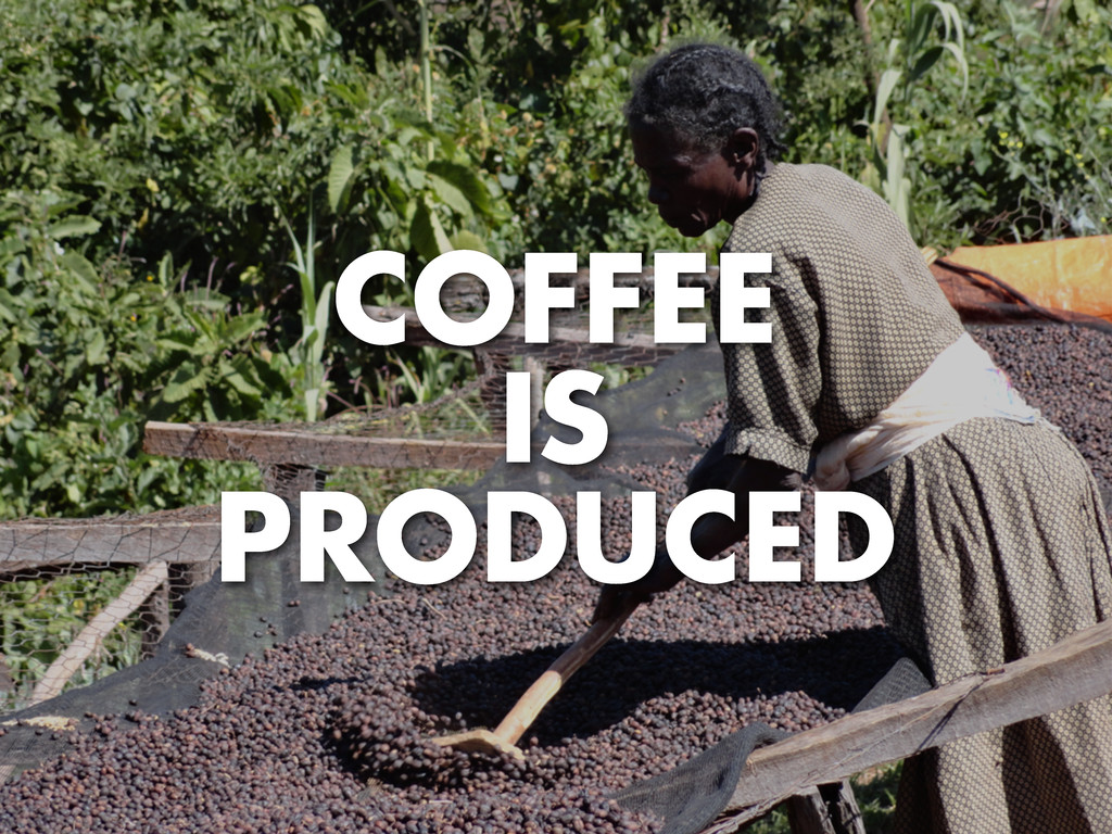 COFFEE IS PRODUCED