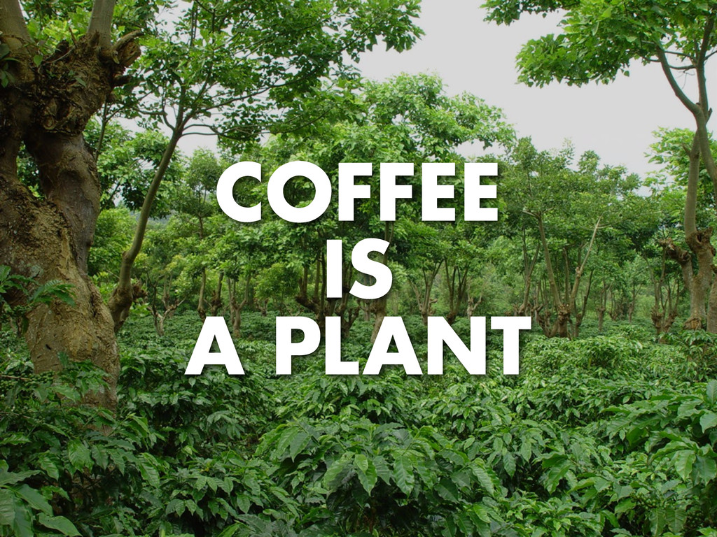 COFFEE IS A PLANT