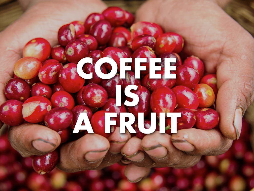 COFFEE IS A FRUIT