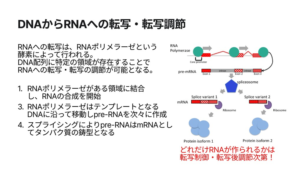 DNAからRNAへの転写・転写調節 1. 3. 4. RNAポリメラーゼがある領域に結合 し、...