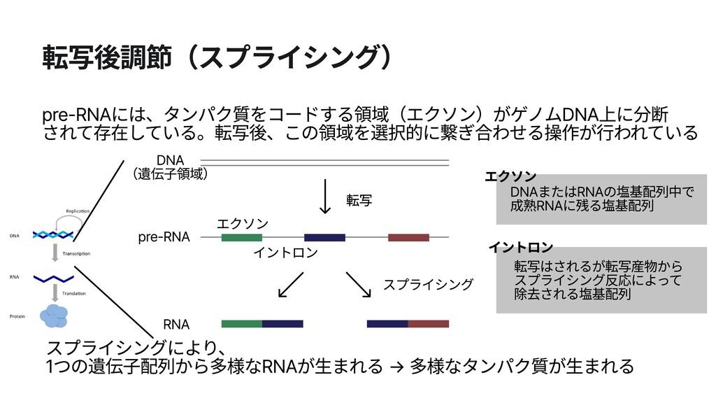 転写後調節(スプライシング) エクソン エクソン DNAまたはRNAの塩基配列中で  成熟RN...