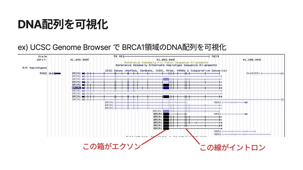 DNA配列を可視化 この箱がエクソン ex) UCSC Genome Browser で BR...