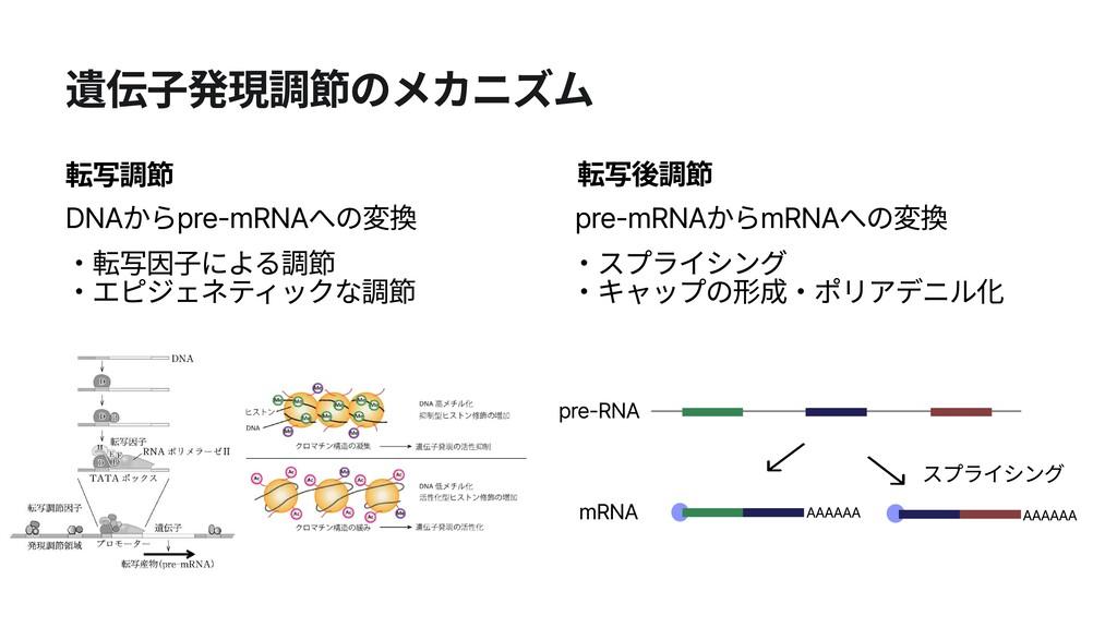 遺伝子発現調節のメカニズム 転写調節 ・転写因子による調節  ・エピジェネティックな調節 転...