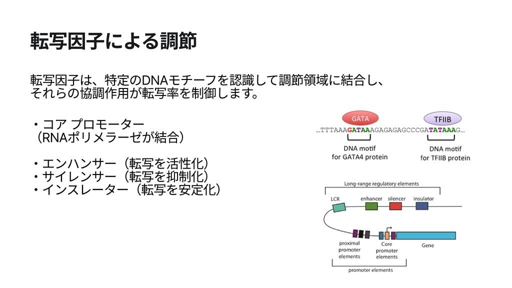 転写因子による調節 転写因子は、特定のDNAモチーフを認識して調節領域に結合し、 それらの協...