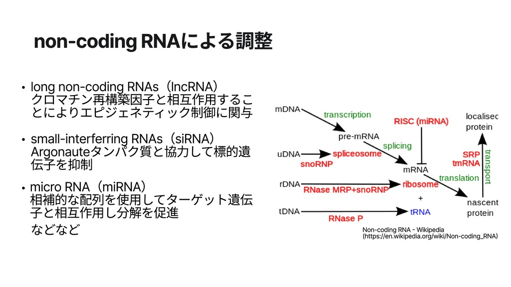 non-coding RNAによる調整 long non-coding RNAs(lncRNA...