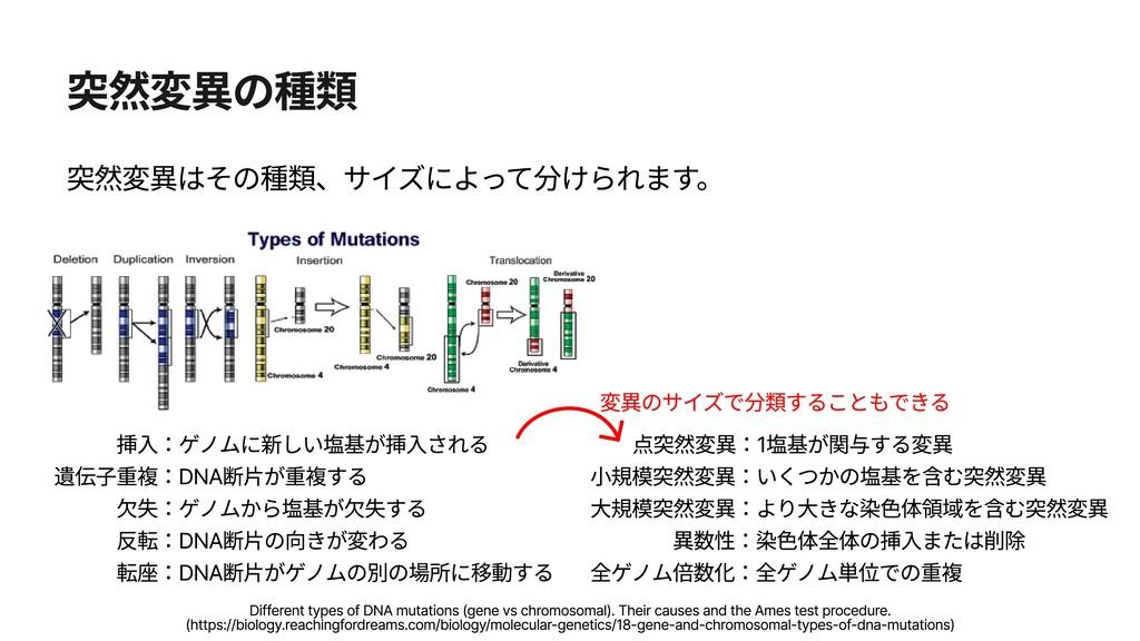 突然変異の種類 突然変異はその種類、サイズによって分けられます。 変異のサイズで分類することも...