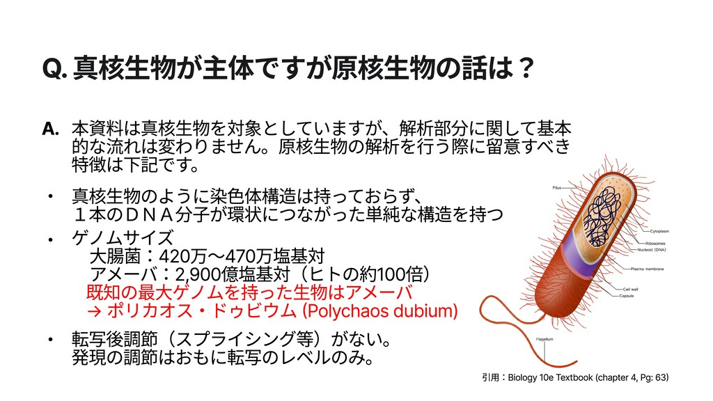 Q. 真核生物が主体ですが原核生物の話は? A. 転写後調節(スプライシング等)がない。 発...
