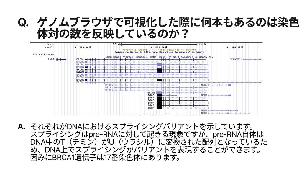 Q. ゲノムブラウザで可視化した際に何本もあるのは染色 体対の数を反映しているのか? A. そ...