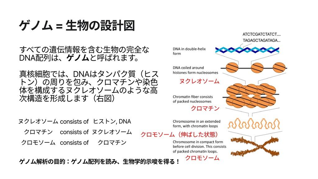 ゲノム = 生物の設計図 すべての遺伝情報を含む生物の完全な DNA配列は、ゲノムと呼ばれます...