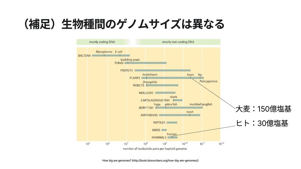 (補足)生物種間のゲノムサイズは異なる  ヒト:30億塩基 大麦:150億塩基 How big...